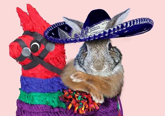 Hop Into San Miguel's Easter Films