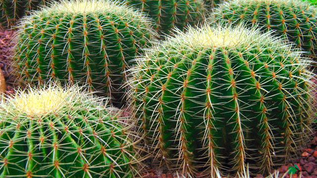 Up to 500 Mexican cacti in danger of extinction arrive in Spain as part of conservation effort