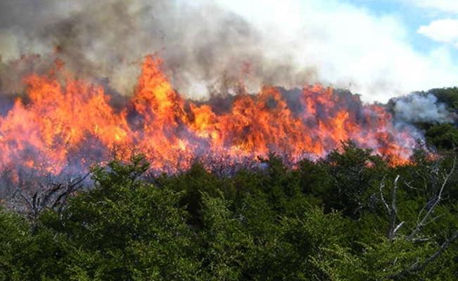 Fire devastates 500 hectares of sacred Wixárika territory in San Luis Potosi